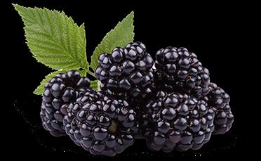 blackberry-isolated-crop-u21165